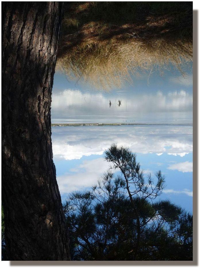 L'arbre aux rêves